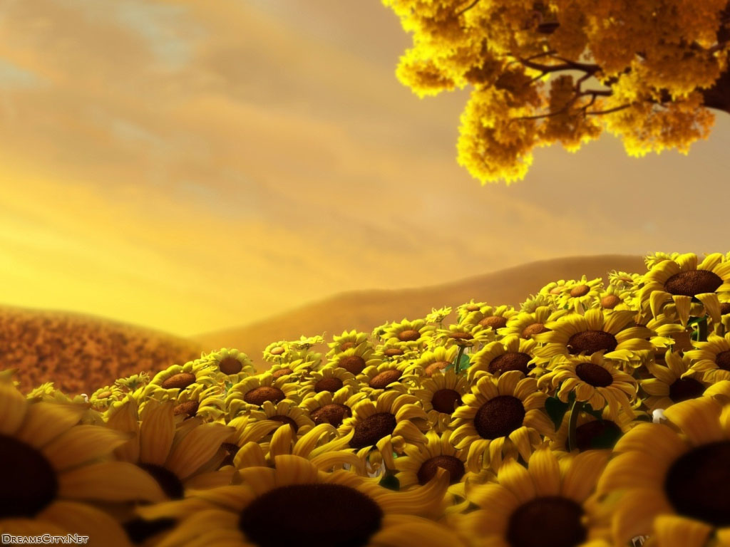 sunflower and sunset