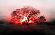 صور وخلفيات اشجار