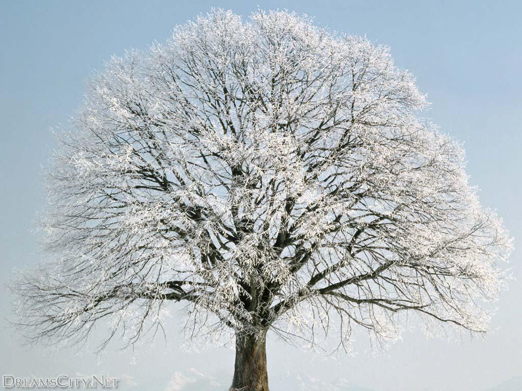 tree (15)