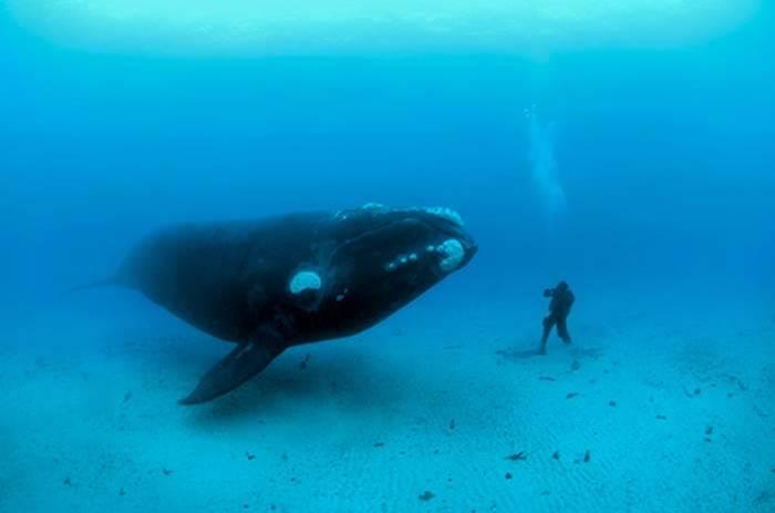 هل سمعت من قبل صوت الحوت ؟ اسمعه الآن