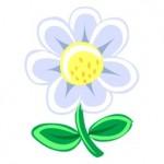 white-flower-37926
