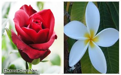 الفرق بين الورود والزهور بالتفصيل
